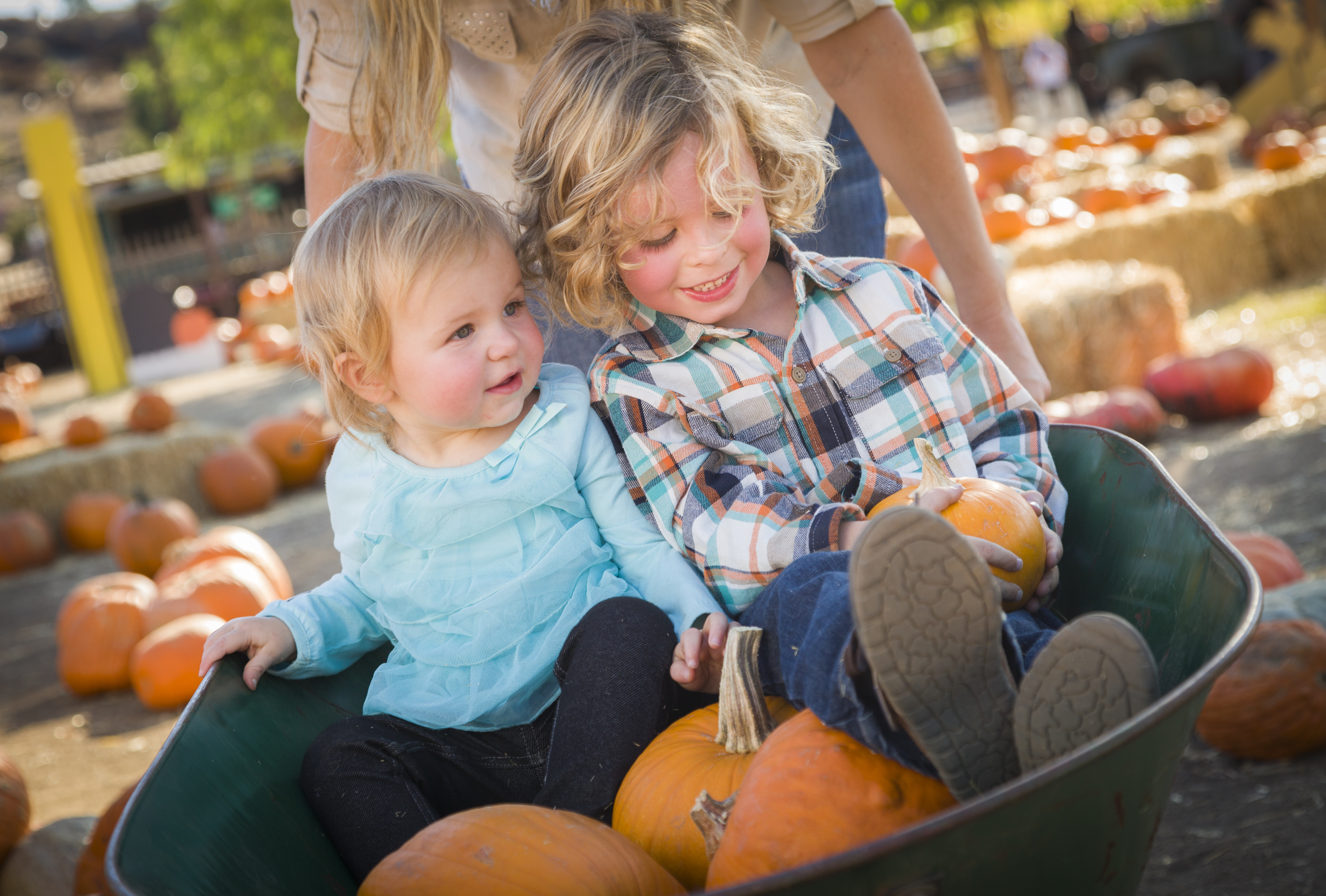 Pumpkin Patches In Mooresville NC